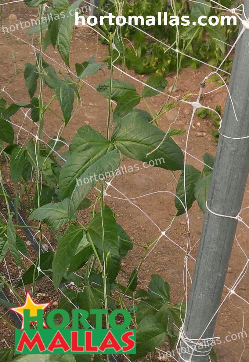 double support net in crop