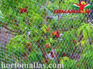 árbol con protección de malla anti-pájaros