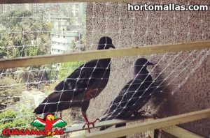 Pigeons trying to enter protected area by GUACAMALLA bird net