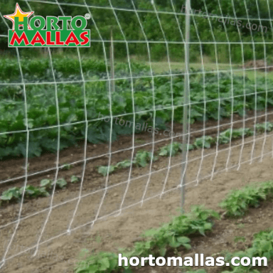 wall trellis support on beans crops