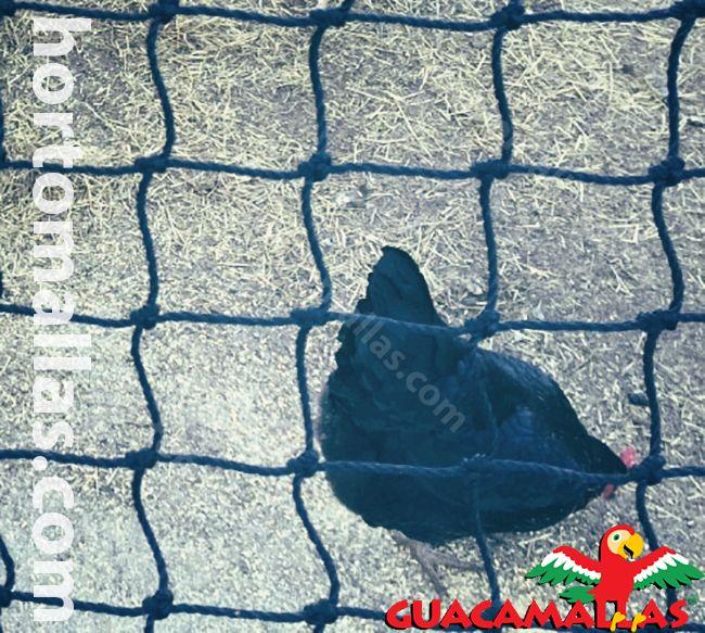 Evite perdas e danos em seus cultivos causados pelas aves
