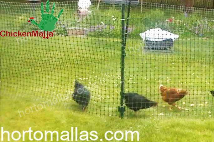 Você pode criar galinheiros ao ar livre com a malha/rede galinheira CHICKENMALLA® sem se preocupar com predadores.