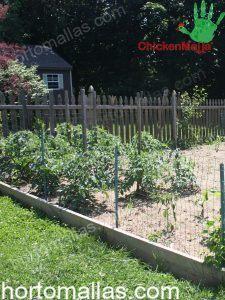 jardín con cerca hecha con tela gallinera