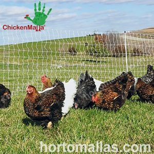 aves de corral protegidas con CHICKENMALLA malla gallinera