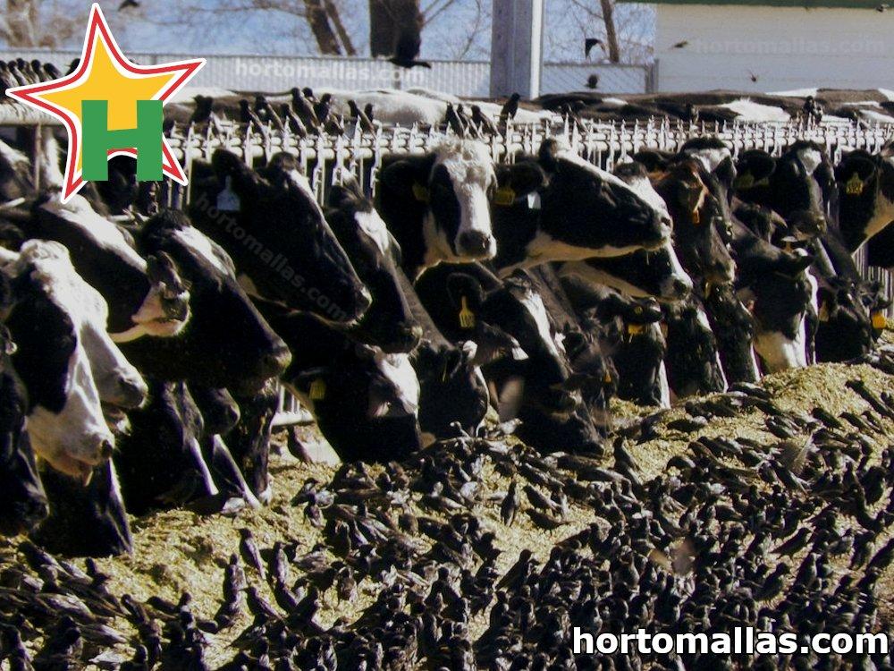 ¿Cansado de alimentar pájaros junto con su ganado? Usa la malla para el control de aves.
