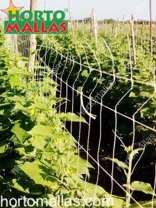 malla espaldera en cultivo de hortalizas