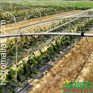 cultivo de hortalizas con soporte de HORTOMALLAS