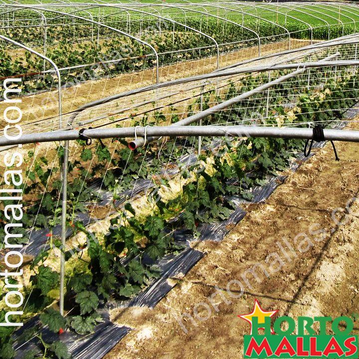 Graças ao tamanho dos quadrados/caixas da malha/rede treliça, as hortaliças/vegetais podem trepar naturalmente.