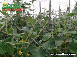 soporte vertical aplicada en cultivo