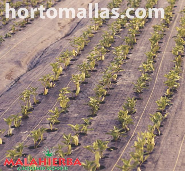Find the best price of ground cover here. Anti-weed professional economic and effective method
