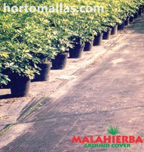 macetas sobre tela ground cover