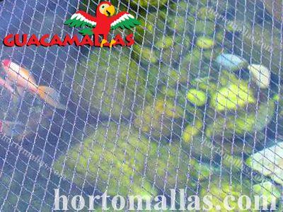 O controle de aves também é necessário em tanques/viveiros, dado que os peixes também são uma fonte de alimento para essas criaturas.