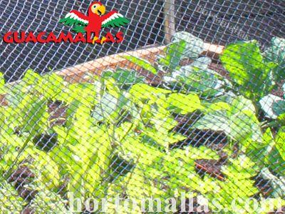 Aumente e melhore seu cultivo com a proteção da rede anti-aves GUACAMALLAS