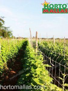 hortalizas con soporte de malla espaldera