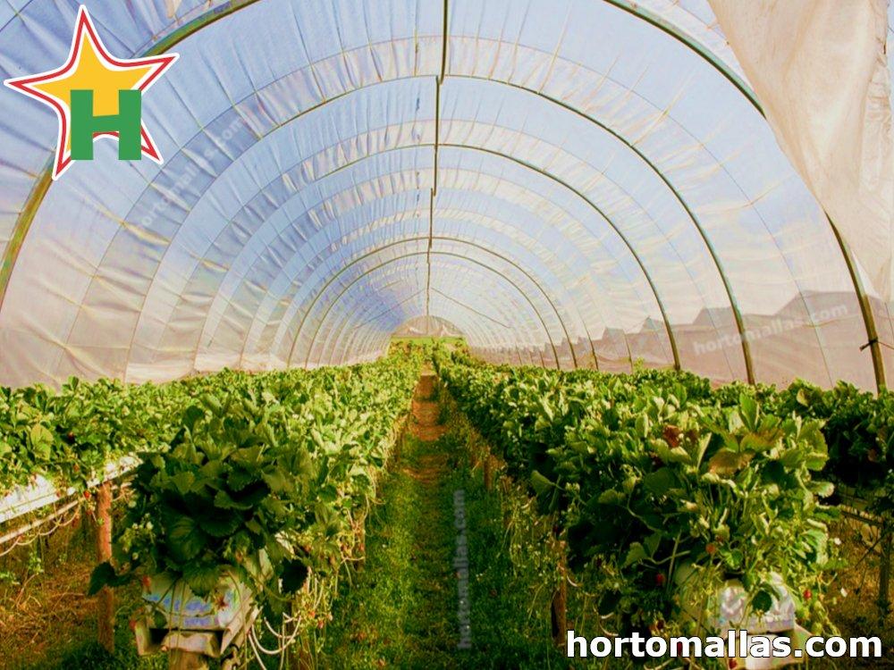 Horticultura de invernadero.