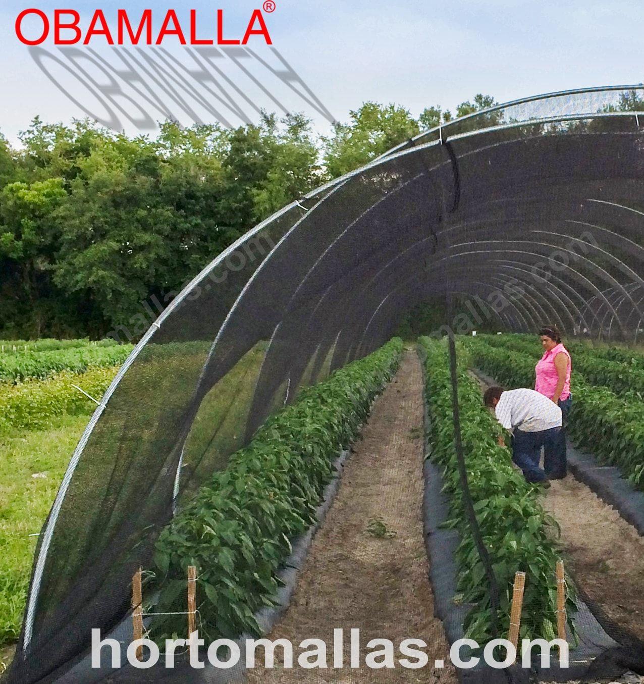 Malha/Rede de sombreamento OBAMALLA® instalada em micro-túnel em um cultivo de hortaliças/vegetais.