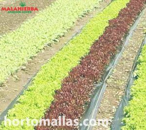 malla anti-maleza ground-cover en cultivos