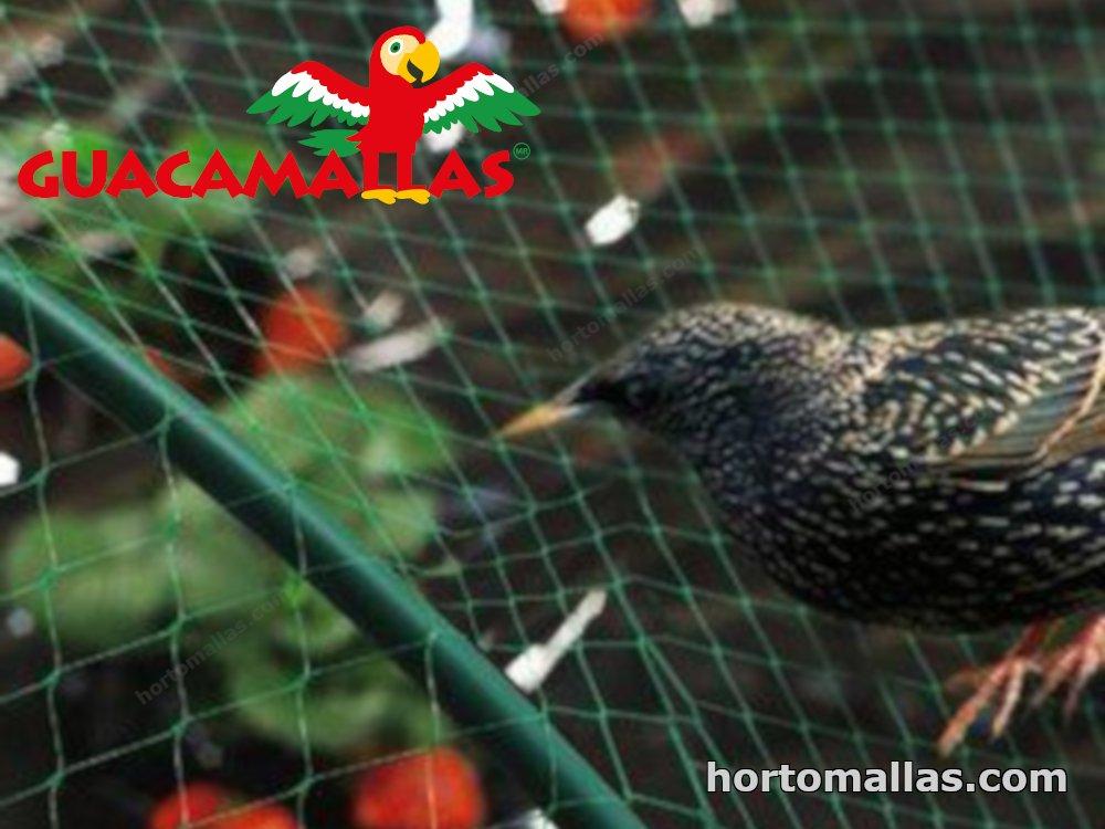 Especialista en productos lácteos ofrece métodos para manejar las aves alrededor de la ganadería.