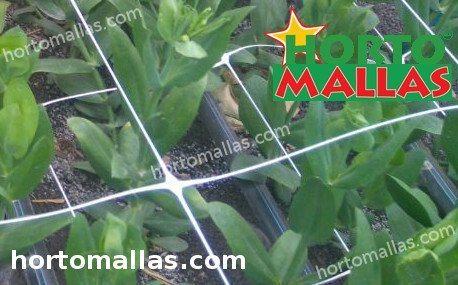 flowers using HORTOMALLAS support net