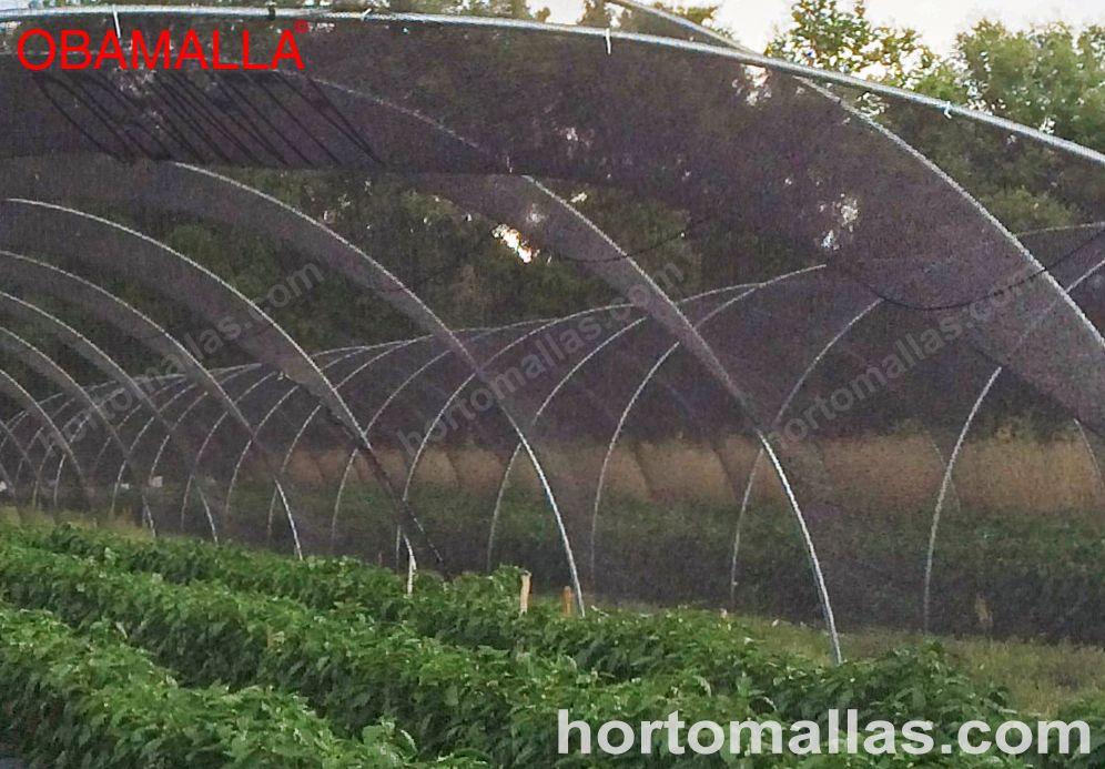 Diferentes tipos de casa sombra en el cultivo de hortalizas