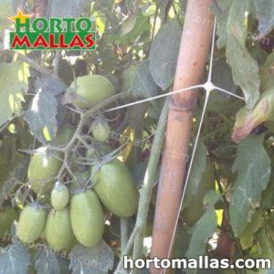 cultivo de tomate entutorado