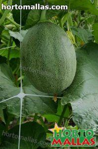 red de soporte entutorando melon