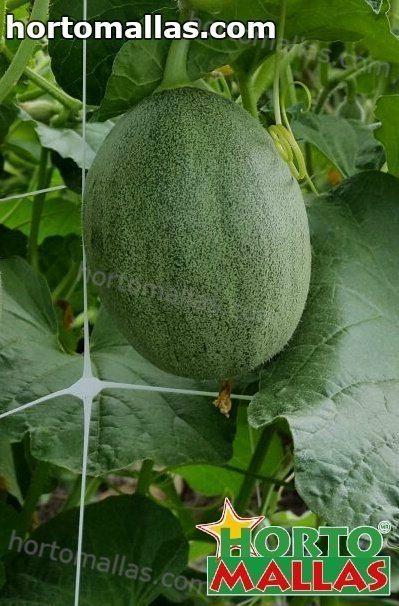 O HORTOCOST fornece as informações atualizadas em tempo real do preço de todas as hortaliças/vegetais.