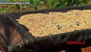 camarones secandose sobre malla Obamalla