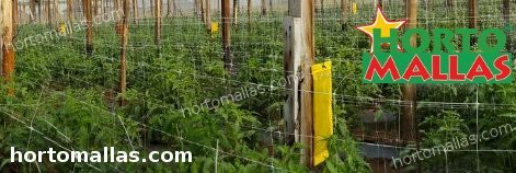 hortomallas support net in tomato crops