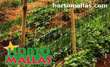 vertical trellis support used on garden