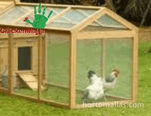 En la imagen se observan gallinas protegidas en un gallinero.