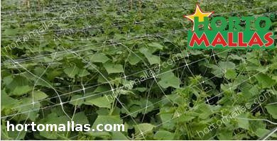 hortomallas support net used for provide support in cropfield