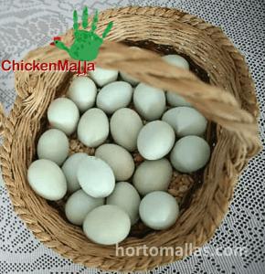 En la imagen se observan huevos producidos en traspatio.