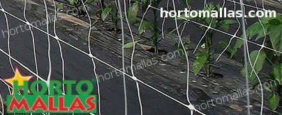 vertical support in greenhouse