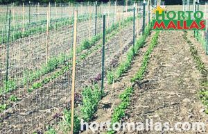 Commercial trellis for beans
