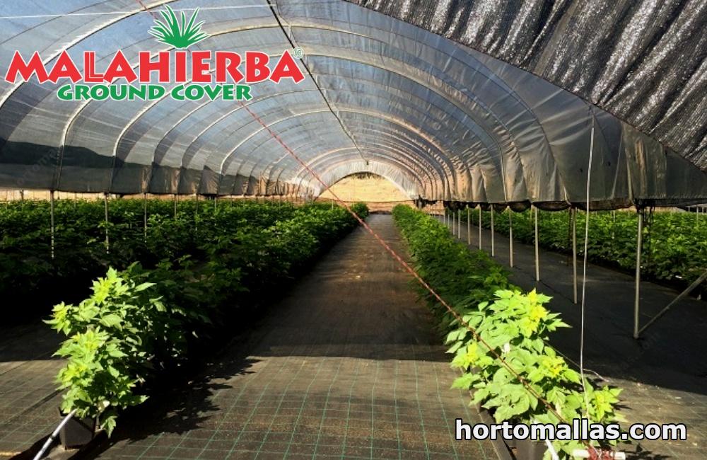 En la imagen se observa un invernadero protegido con malla ground cover contra la maleza.