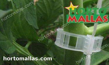 clips brindando soporte en el tallo de la planta