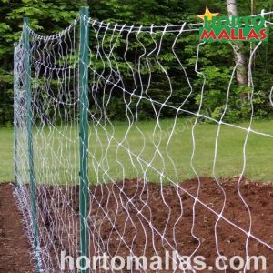 Squash trellising nets ready to be used