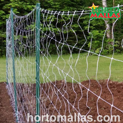 TRELLIS FOR SQUASH, A GREAT OPTION FOR AN EASY HARVEST AND SPACE-SAVING