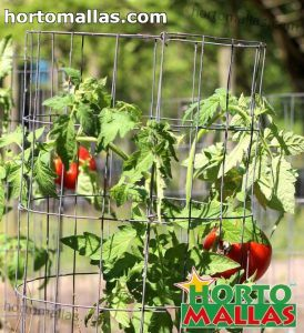 tomato cage used in plant