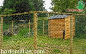 opena air chicken coop with hexagonal poultry netting