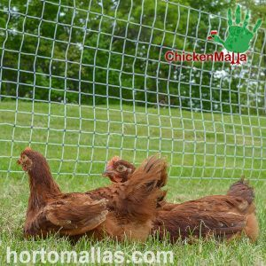 poultry nets used in organic chicken farms
