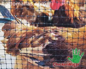 plastic poultry netting by CHICKENMALLA
