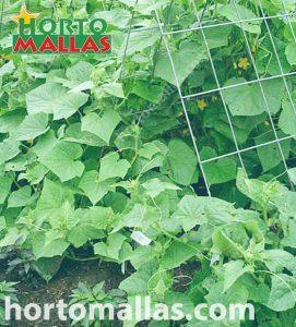 cultivar pepinos con malla espaldera HORTOMALLAS