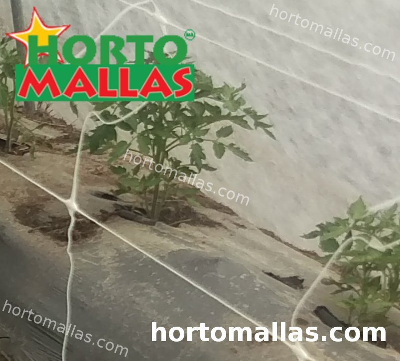 HORTOMALLAS support net on tomato crops inside of tunnel