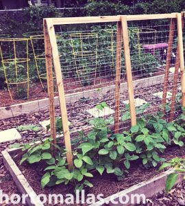 tomato cages and bean trellises