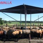 Malla obamalla para ganado