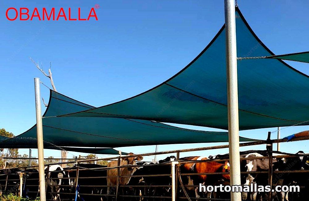 mesh net shading dairy herd