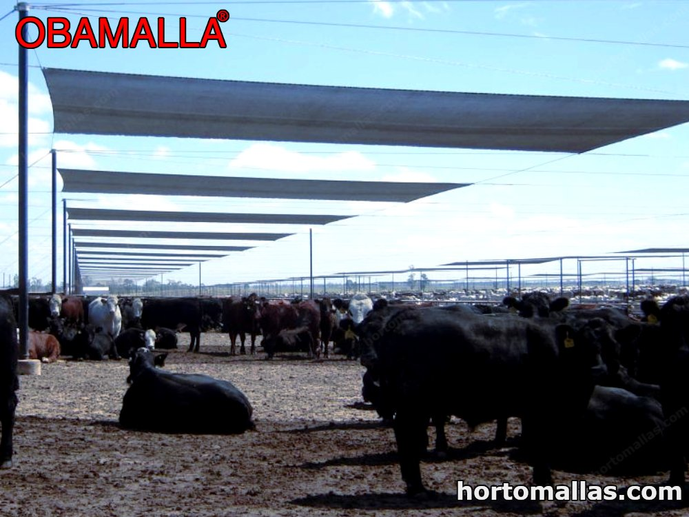 cattle protected by shade mesh or mesh