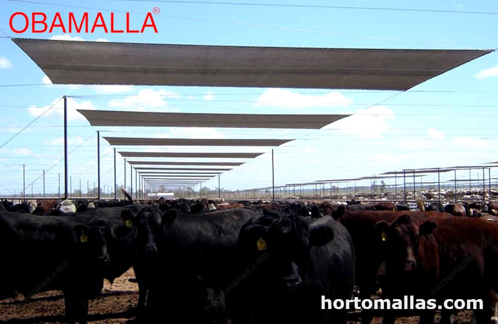 Shade mesh in cattle